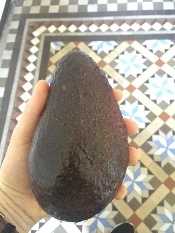 Giant avocado! Právě v tomto momentu jsem opravdu byla v sedmém nebi