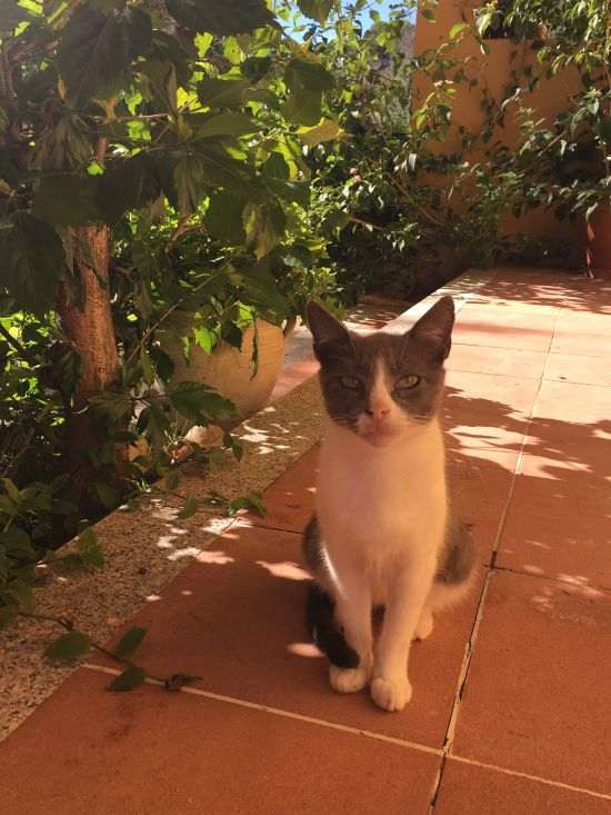 Koček na Sardinii je fakt dost